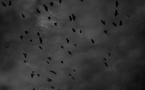Картинка черно белое, вороны, crow, черно белое фото, inst:newshtefan