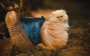 Картинка кот, улица, пушистый, ведро, метла