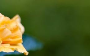 Картинка цветок, жёлтый, flower, triple, multi, screen, monitor, 5760x1080