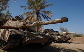 Обои пальма, танк, usa, abrams, военная техника