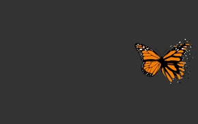 Картинка серый, бабочка, минимализм