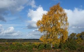Картинка поле, осень, небо, облака, дерево, береза