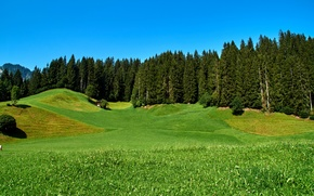 Картинка зелень, небо, трава, деревья, горы, голубое, поля, Германия, солнечно, леса, луга, Obernau