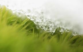 Обои травка, снег, весна, капли