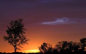 Картинка небо, облака, закат, дерево, горизонт, силуэт