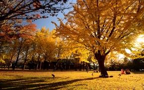 Картинка осень, листья, парк, люди, дерево