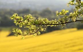 Картинка зелень, лето, макро, свет, Ветка