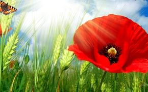 Обои поле, цветок, небо, облака, коллаж, бабочка, мак, колосья