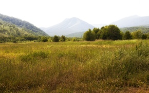 Картинка поле, трава, деревья, горы, луг, Россия, леса, Камчатка