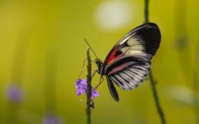 Картинка цветок, бабочка, растение, насекомое, мотылек