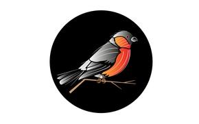 Обои птица, круг, ветка