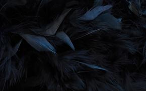 Картинка текстура, перья, черные