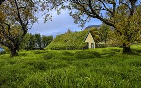 Картинка grass, trees, church, cloudy, turf church