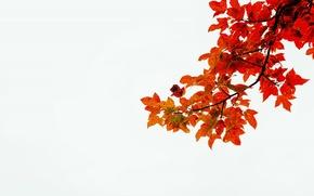 Картинка осень, белый, листья, стебли, ветка, красные листья