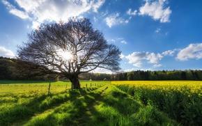 Обои лето, поле, дерево