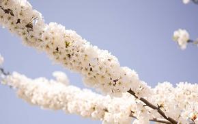 Картинка макро, ветка, весна, цветочки, Spring, blossoms, makro, flowering