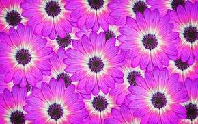 Обои цветы, макро, лепестки, природа
