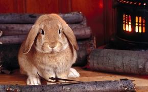 Картинка Кролик, печка, русый, дрова