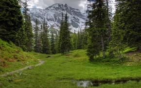 Картинка небо, горы, долина, деревья, трава, австрия