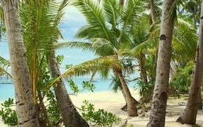 Обои море, пальмы, тепло, отдых, лето, пляж, песок
