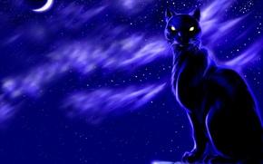 Обои луна, кошак, ночь, Рисунок