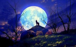 Картинка трава, ночь, волк, силуэт, холм, полнолуние, кусты, воет, одинокий, 3d art