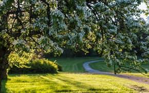 Картинка дерево, весна, Швеция, цветение, Sweden, цветки