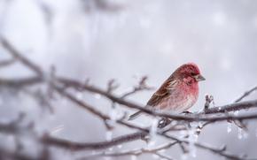 Обои ветка, птица, природа