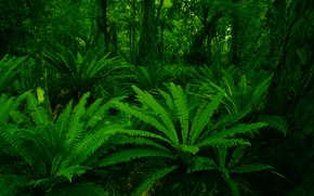 Обои green, forest, leaf, plants