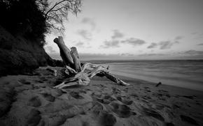 Обои море, пляж, вода, дерево, белое, берег, вечер, черное, коряга