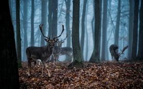 Картинка лес, туман, Олень, сумерки