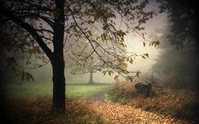 Картинка пейзаж, природа, туман, парк, фон, дерево