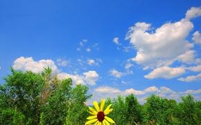 Обои небо, зелень, цветок