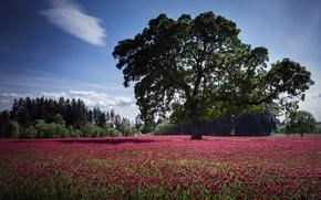Картинка поле, цветы, природа, дерево