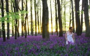 Обои цветы, утро, The carpets of bluebells, девушка, природа