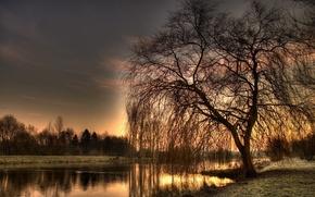 Обои река, HDR, Дерево