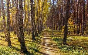 Обои лес, пейзаж, природа