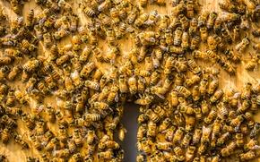 Картинка фон, улей, пчёлы