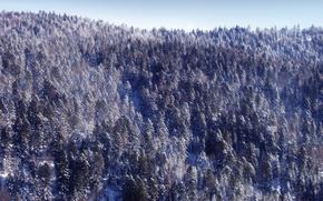 Картинка зима, лес, снег, новый год