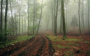 Картинка дорога, лес, пейзаж, туман