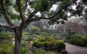Картинка city, park, tree