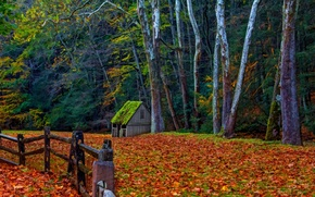Обои nature, forest, park, trees, leaves, colorful, road, path, autumn