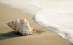 Картинка песок, море, ракушка, прибой