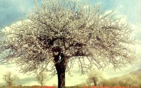 Картинка деревья, цветы, дерево, маки, весна, цветущие