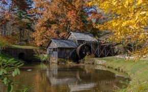 Картинка лес, деревья, река, колесо, мельница