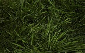 Обои трава, зелень, травка