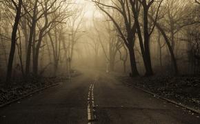 Картинка дорога, осень, природа, туман, парк, утро