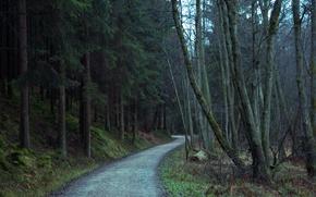 Картинка лес, деревья, природа, дорожка, forest, Nature, trees, path