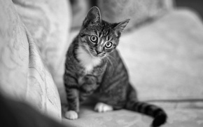 Обои диван, глаза, кот