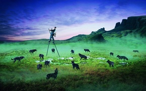 Обои поле, животные, страх, человек, вечер, волки, Почтальон, ходули